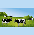 black and white cows vector image