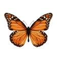 Butterfly realistic isolated vector image