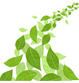 green leaves background card vector image