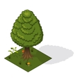 forest tree isometric vector image