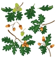 Oak branches with leaves and acorns vector image