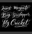 insect and bug hand written typography vector image
