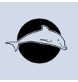 a dolphin vector image