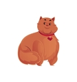Cute and funny fat chubby fluffy red cat vector image