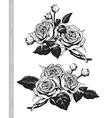 Hand sketched set of white roses in vintage style vector image