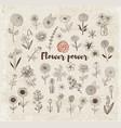 set of doodle sketch flowers on vintage paper vector image