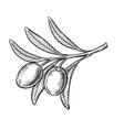 black olive symbol vector image vector image