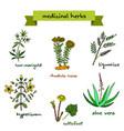 medicinal plants hand drawn vector image