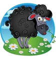 Black dark sheep with blade of grass on color vector image