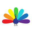 Peacock Feather out open colorful rainbow tail vector image