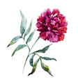 Watercolor peony flower vector image vector image