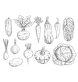 Vegetables sketch isolated icons vector image