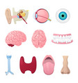 human anatomy organs medical vector image