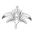 Tiger lily flower outline vector image