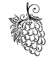 Grapes wine fruits vector image
