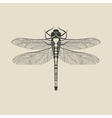 black dragonfly insect vector image