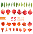 Pomegranates Flowers and Leaves Watercolor vector image