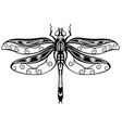 decorative dragonfly vector image vector image