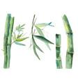 watercolor bamboo vector image vector image