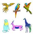 color  set of animals parrots vector image