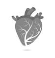 isolated human heart vector image