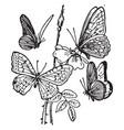 four butterflies vintage vector image