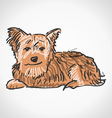 Sitting Yorkshire Terrier vector image vector image