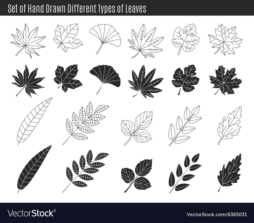 Set of hand drawn different types of leaves vector