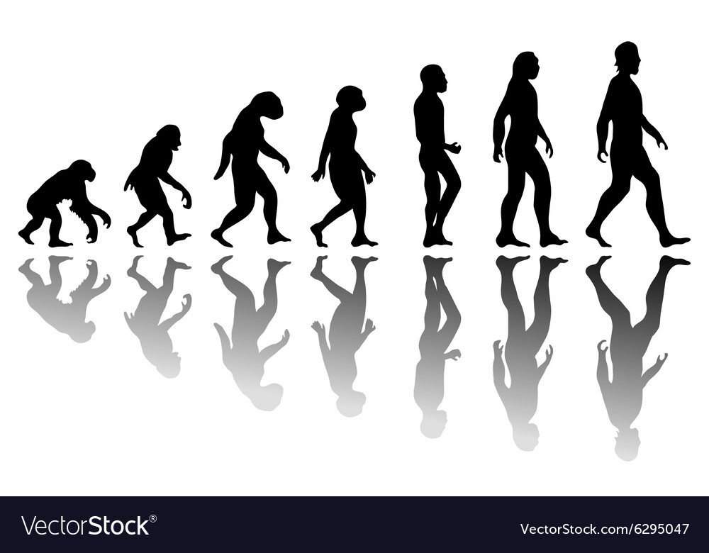 Silhouette man evolution vector