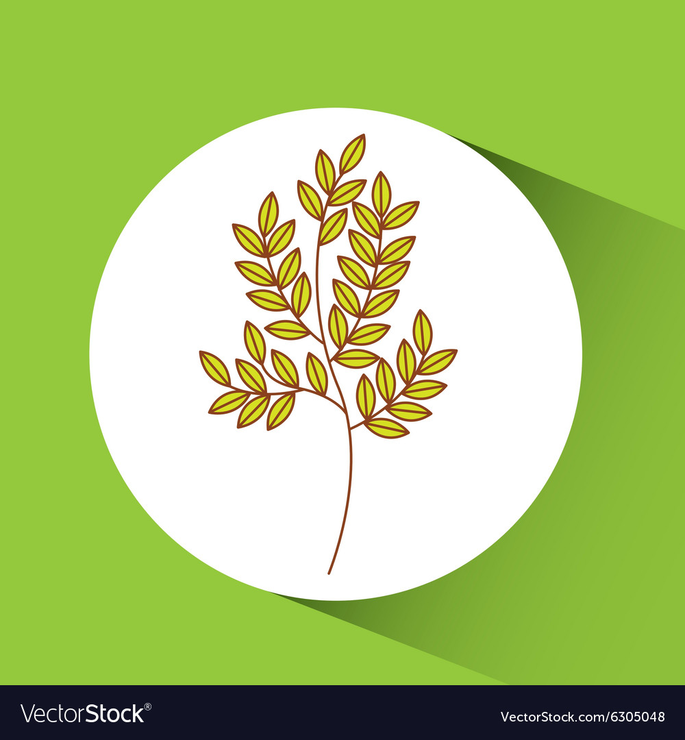 Fresh vegetable design vector