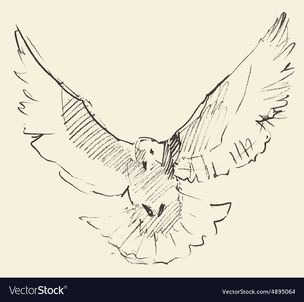 Vintage white pigeon peace engraved vector