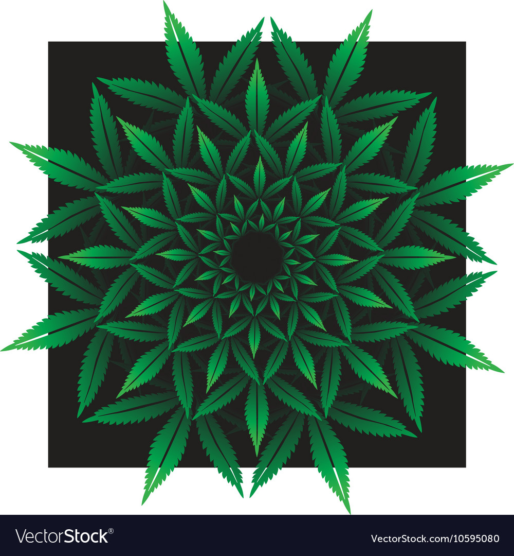 Round pattern from cannabis leaf on black vector