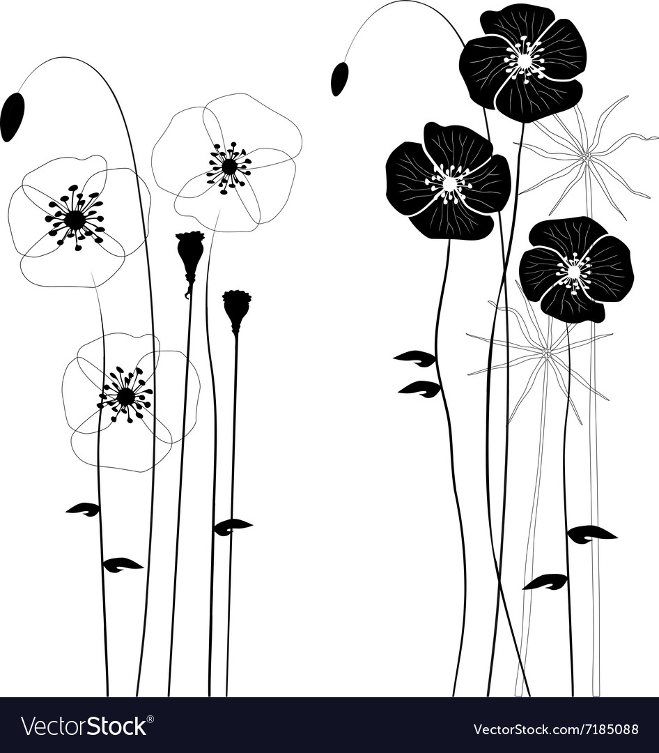 Collection wild plant poppy vector