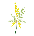 Fresh Sesbania Javanica Plant on White Background vector image
