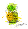 Sketch of pineapple vector image