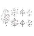 Set of leaves outlines Maple oak birch vector image
