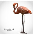 Flamingo low poly style vector image