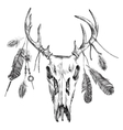 with deer scull and feathers vector image