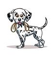 Dalmatian Puppy vector image