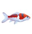 fish koi vector image