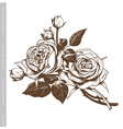 Hand sketched vintage bouquet of white roses vector image