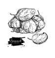 Spinach leaves hand drawn heap Isolated vector image