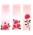 Three banners with pink roses vector image