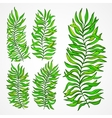 Set of exotic foliage vector image vector image