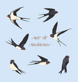 set of simple swallows vector image