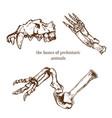 sketchy prehistorical bones of animals vector image