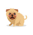 cute cartoon angry pug dog character vector image