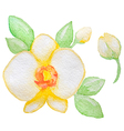 Watercolor yellow orchid vector image vector image