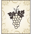 retro engraving of grapevine - vector image vector image