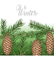 Background with fir branches and cones Detailed vector image vector image